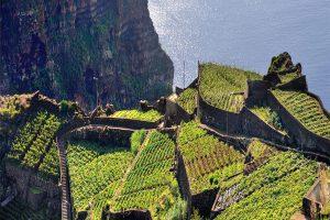 Teraszos szőllő művelés Madeirán
